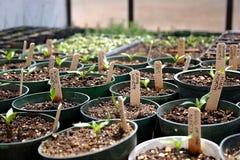 Seedlings Foto de Stock