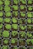 Seedlings. Vegetable seedlings in a farm Stock Photos