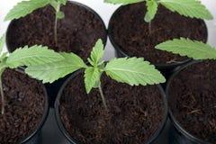 Seedlings Stock Image