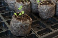 Seedlings Stock Photo