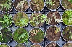 Seedlings Stock Photography