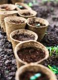 Seedlings Royalty Free Stock Image