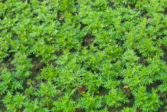 Seedlings Stock Photo