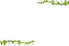 seedlings Fotografia de Stock