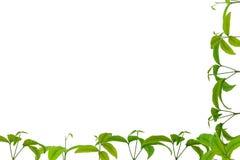 seedlings Fotografia de Stock Royalty Free