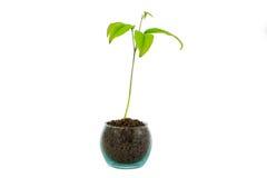seedlings Fotos de Stock