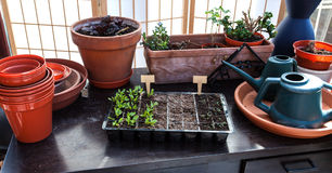 seedlings Photo stock