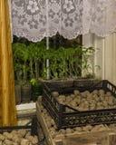 seedlings Imagenes de archivo
