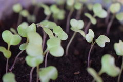 seedlings foto de stock