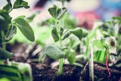 seedlings Foto de archivo libre de regalías