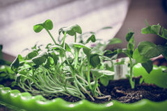 seedlings Fotografía de archivo libre de regalías