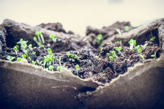 seedlings Photographie stock