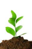 Seedlings Stock Images