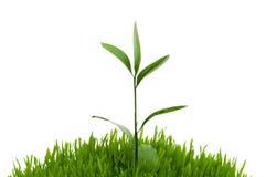 Seedlings imagens de stock royalty free