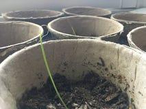 seedlings Images libres de droits