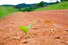 Seedlings along the sidewalk Stock Image