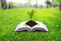 Seedlings based on the book. On the ground, green grass in the park stock photos