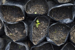 Seedlings born Royalty Free Stock Photography