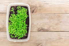 Seedlings in a box, flat lay Stock Image
