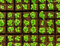 Seedlings in briquettes Royalty Free Stock Images
