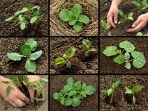 Seedlings collection Stock Photo