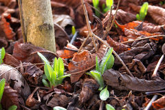 Seedlings coming out in early spring Royalty Free Stock Photos