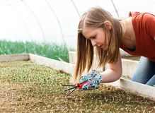 Seedlings Culture Stock Photos