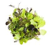 Seedlings da alface Fotografia de Stock Royalty Free