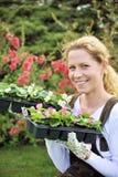 Seedlings da terra arrendada da mulher nova Fotos de Stock Royalty Free