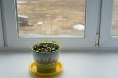Seedlings of flowers Stock Photo