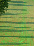 Seedlings form Regular Striped Field with tree shadows Stock Images