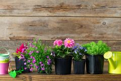 Seedlings of garden plants and beautiful flowers in flowerpots for planting on a flower bed. Garden equipment. Seedlings of garden plants and beautiful flowers stock photos
