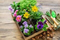 Seedlings of garden plants, flowerpots of flowers, bulbs of flowers. Garden equipment: shovel, rake, gloves. stock photo