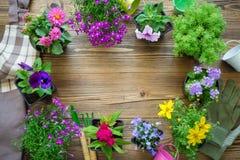 Seedlings of garden plants and nice flowers in flowerpots. Garden equipment: watering can, buckets, shovel, rake, gloves. stock photo