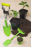 Seedlings and garden tools Royalty Free Stock Images