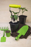 Seedlings and garden tools Stock Photography