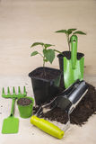 Seedlings and garden tools Royalty Free Stock Photography