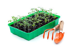 Seedlings and gardening utensils Stock Photos