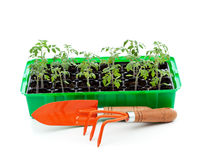 Seedlings in germination tray with gardening tools Royalty Free Stock Photos
