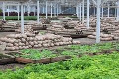 Spring greenhouse nursery Stock Image