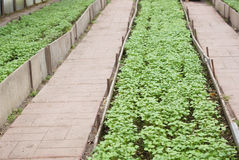 The seedlings in the greenhouse. Stock Photography