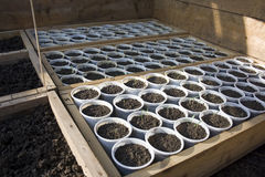 Seedlings in greenhouse Stock Photo