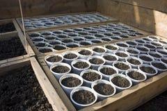 Seedlings in greenhouse stock photo