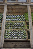 Seedlings in greenhouse Stock Photos
