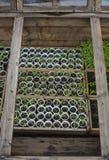 Seedlings in greenhouse Stock Photos