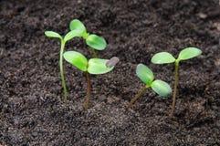 Seedlings growing Stock Photography
