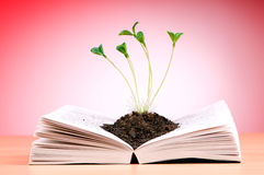 Seedlings growing from book - knowledge concept royalty free stock images