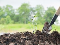 seedlings growing in soil with a complete mineral stock image