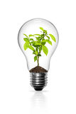 Seedlings grown in light bulb Royalty Free Stock Photography