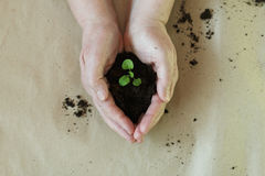 Seedlings in the hands of agriculture Royalty Free Stock Images